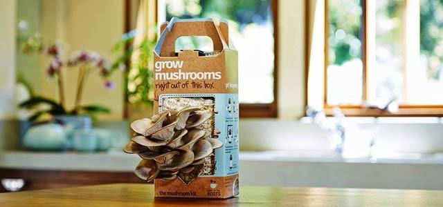 come coltivare funghi in casa