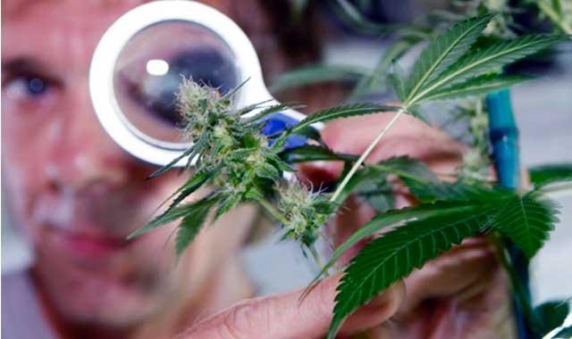 endocannabinoidi